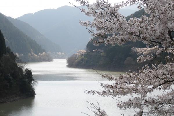 二川ダム湖周辺